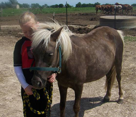 Ponies for sale Northern California - YouTube