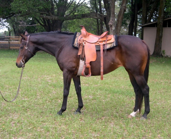 8 Year Old Quarter Horse Bay Mare