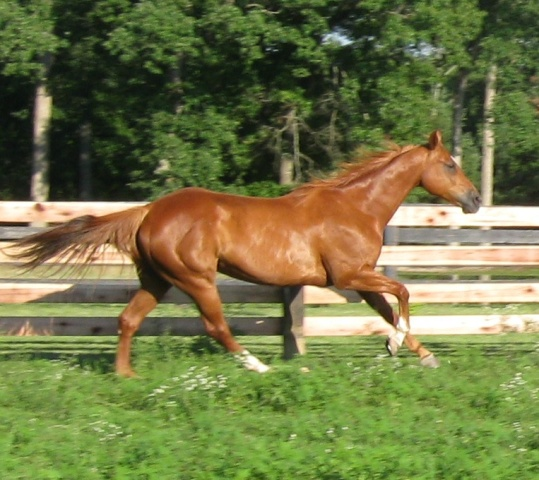 11 year old quarter horse 25 000 view