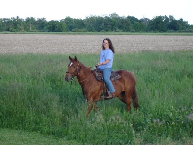 Paint Quarter Horses For Sale In Michigan