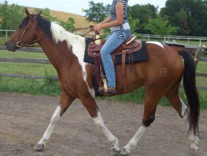 Pennsylvania Horses For Sale In Pennsylvania Horse