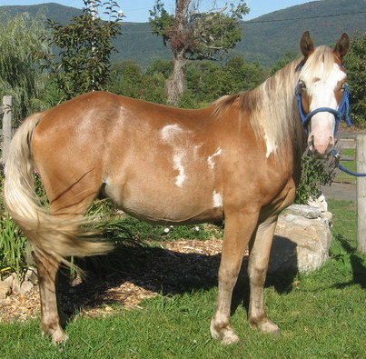 Vermont Horses For Sale In Iowa Horse